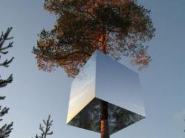 Дерево-гостиница