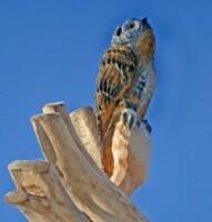 Деревянная скульптура совы