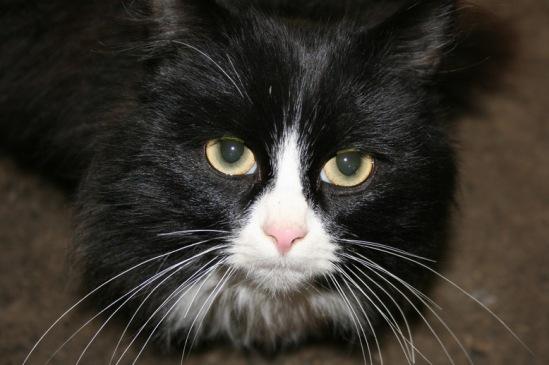 Про кошек 114108--15324013-m549x500-u6562b