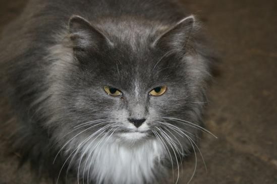 Про кошек 114108--15324015-m549x500-u8accf
