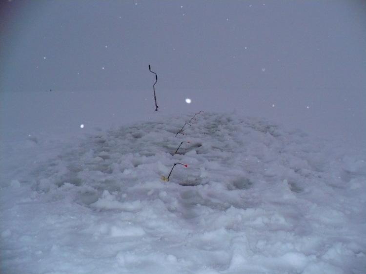 28 февраля 2009 г. Комарово. 63542-37895-15532305-m750x740