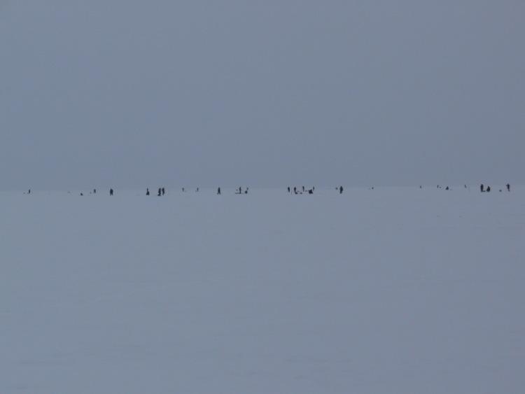 28 февраля 2009 г. Комарово. 63542-d0d9d-15532159-m750x740