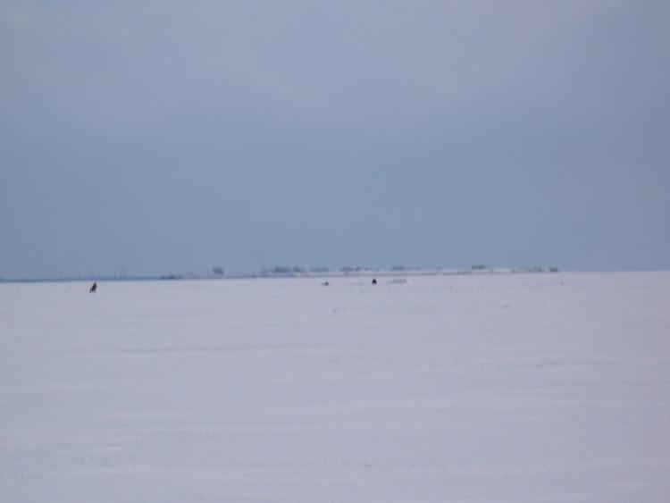 27 марта 2009 г. Комарово. 63542-f788c-16503297-m750x740